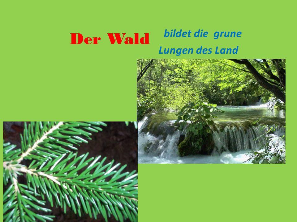 Der Wald bildet die grune Lungen des Land