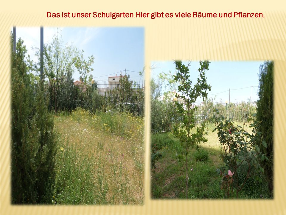 Das ist unser Schulgarten.Hier gibt es viele Bäume und Pflanzen.