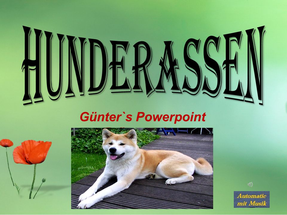 Günter`s Powerpoint Präsentation