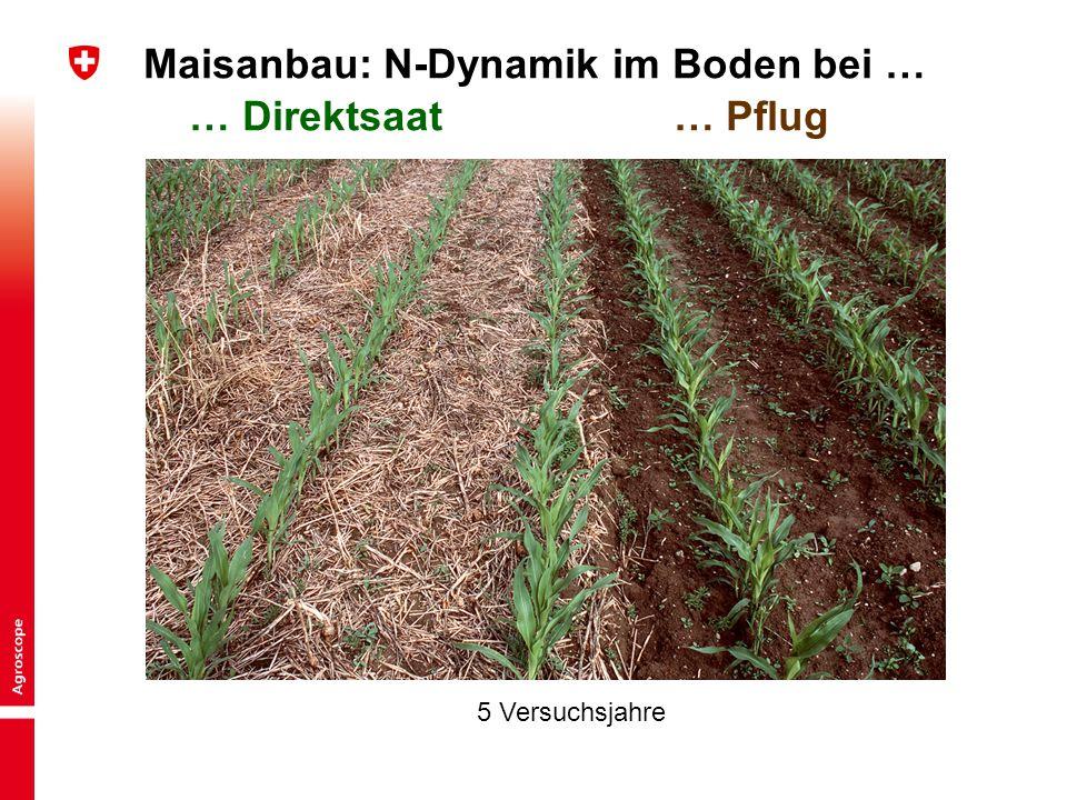 Maisanbau: N-Dynamik im Boden bei … … Direktsaat … Pflug