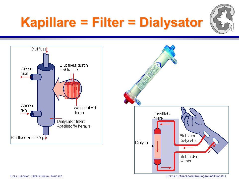 Kapillare = Filter = Dialysator