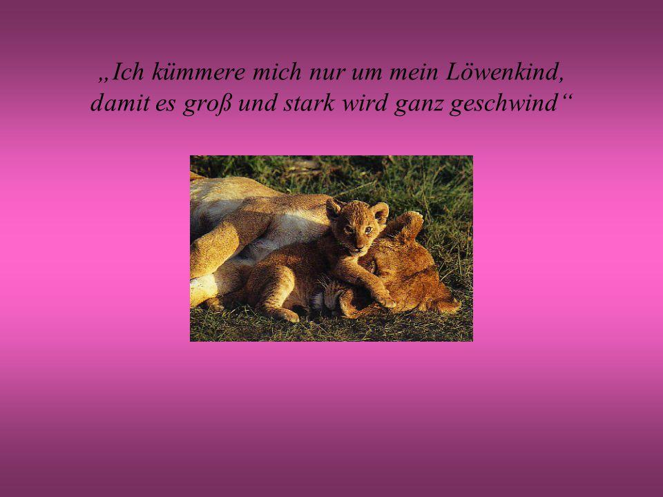 """""""Ich kümmere mich nur um mein Löwenkind, damit es groß und stark wird ganz geschwind"""