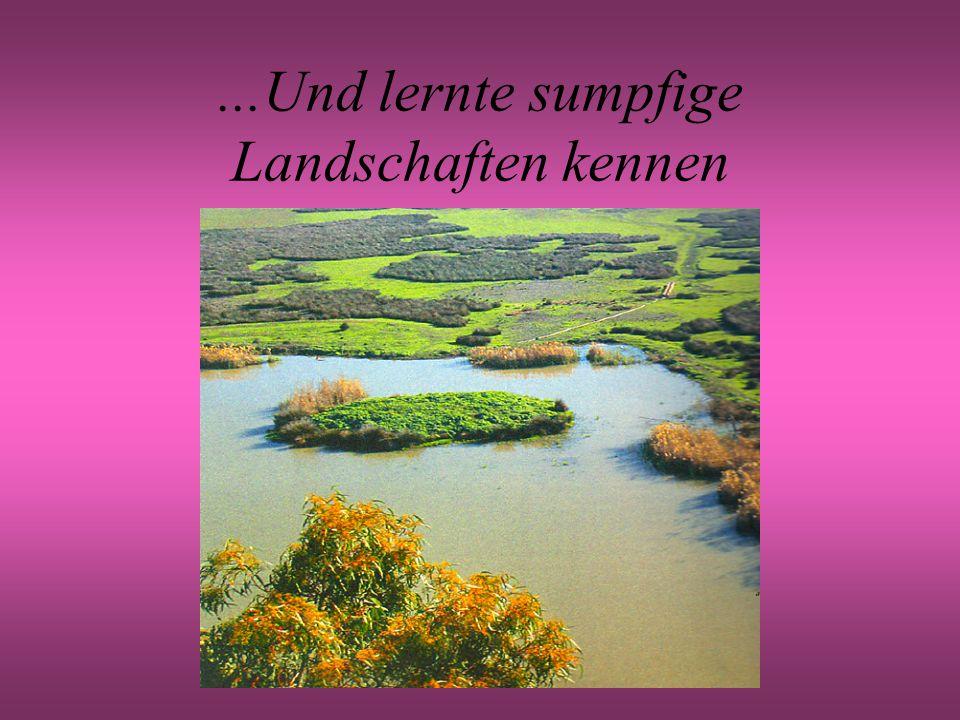 ...Und lernte sumpfige Landschaften kennen