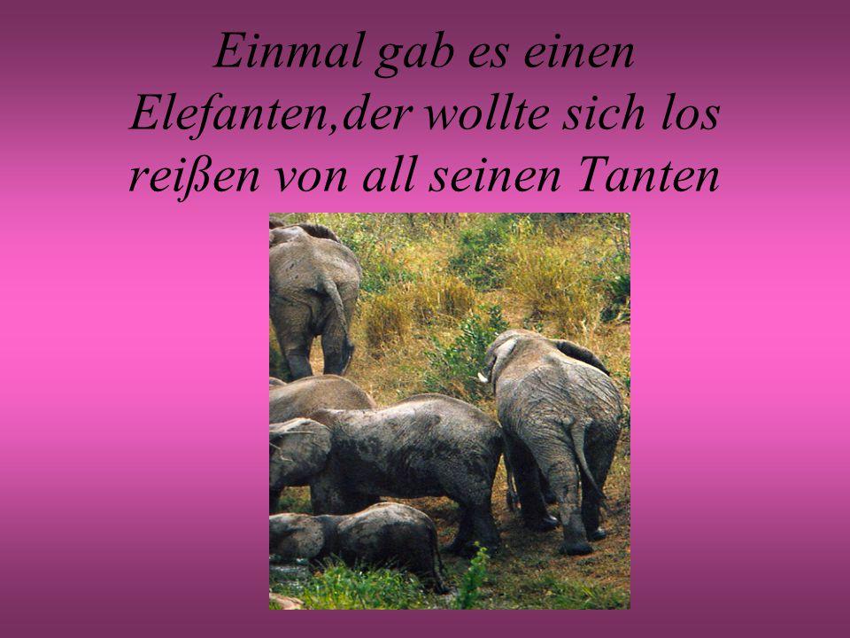 Einmal gab es einen Elefanten,der wollte sich los reißen von all seinen Tanten
