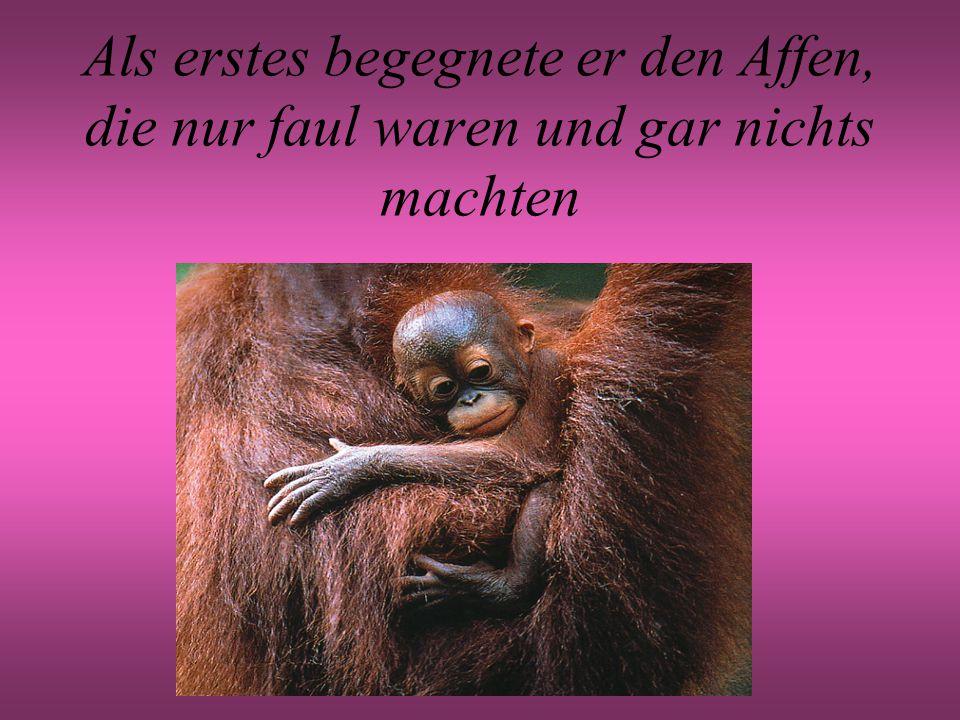 Als erstes begegnete er den Affen, die nur faul waren und gar nichts machten