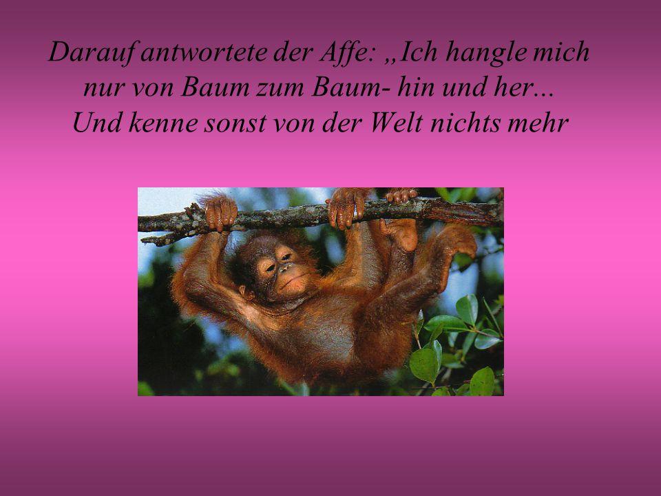 """Darauf antwortete der Affe: """"Ich hangle mich nur von Baum zum Baum- hin und her..."""