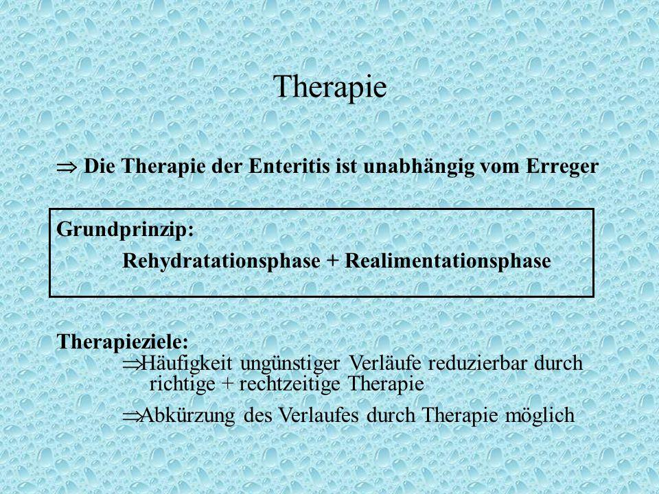 Therapie  Die Therapie der Enteritis ist unabhängig vom Erreger