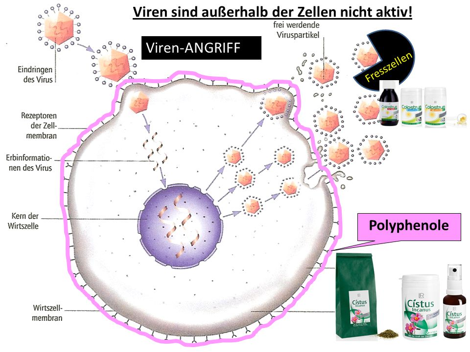 Viren sind außerhalb der Zellen nicht aktiv!