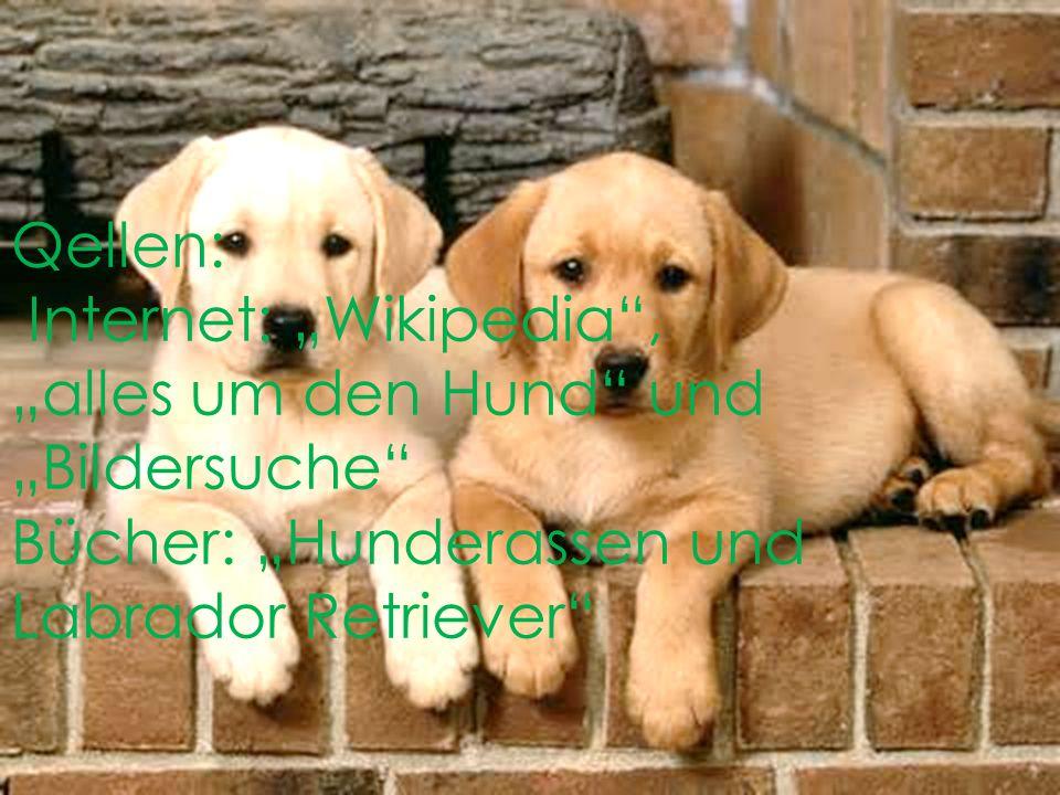 """Qellen: Internet: """"Wikipedia , """"alles um den Hund und """"Bildersuche Bücher: """"Hunderassen und Labrador Retriever"""