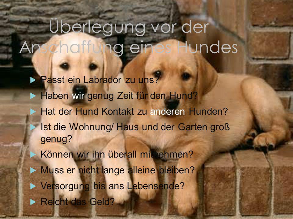 Überlegung vor der Anschaffung eines Hundes
