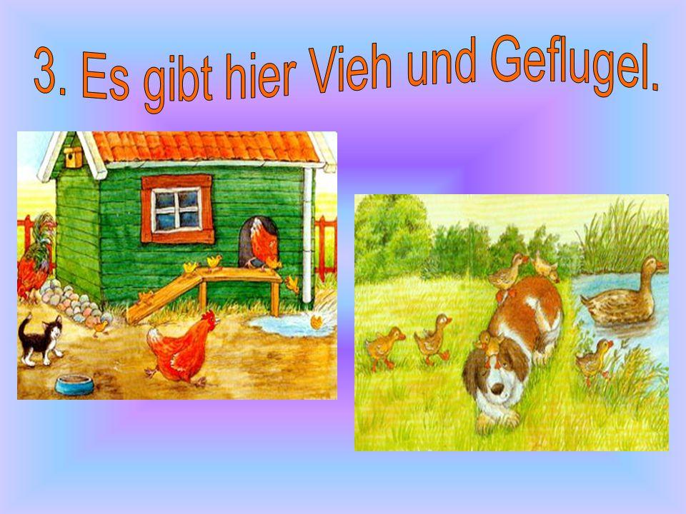 3. Es gibt hier Vieh und Geflugel.