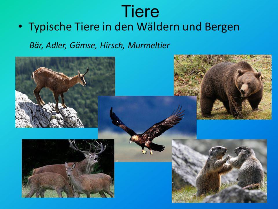 Tiere Typische Tiere in den Wäldern und Bergen