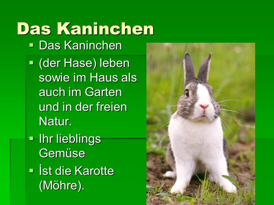 Das Kaninchen Das Kaninchen
