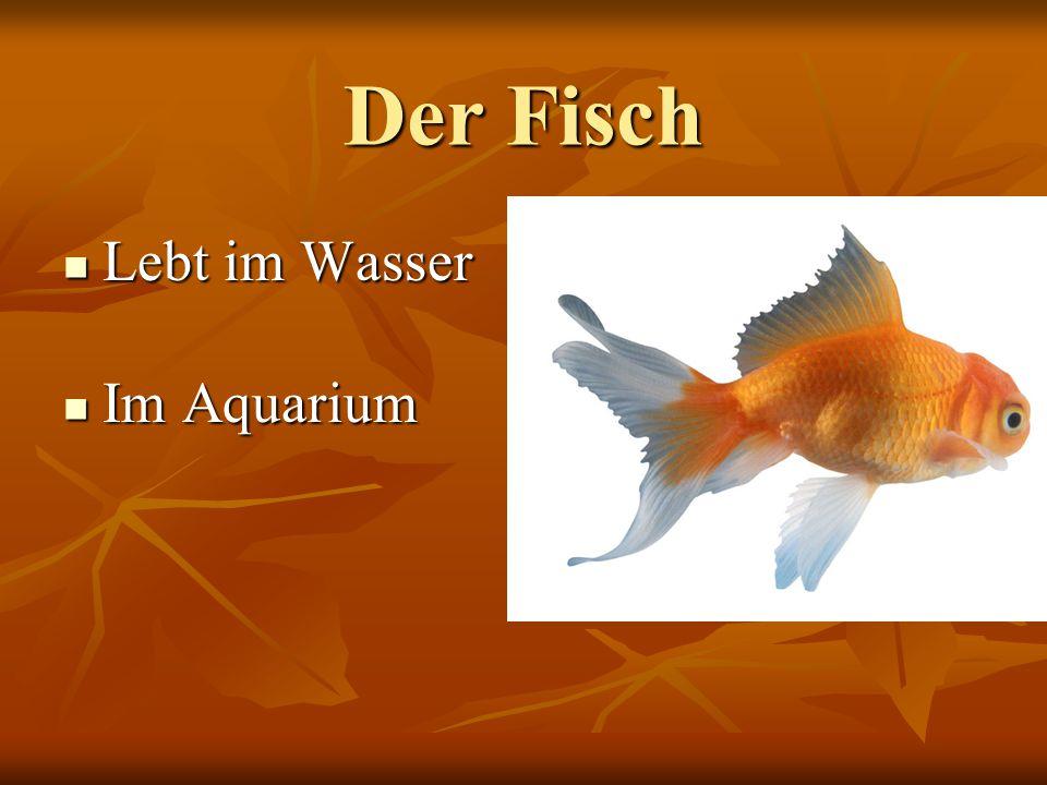 Der Fisch Lebt im Wasser Im Aquarium