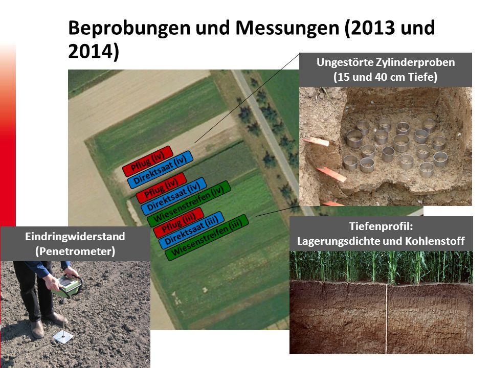 Beprobungen und Messungen (2013 und 2014)