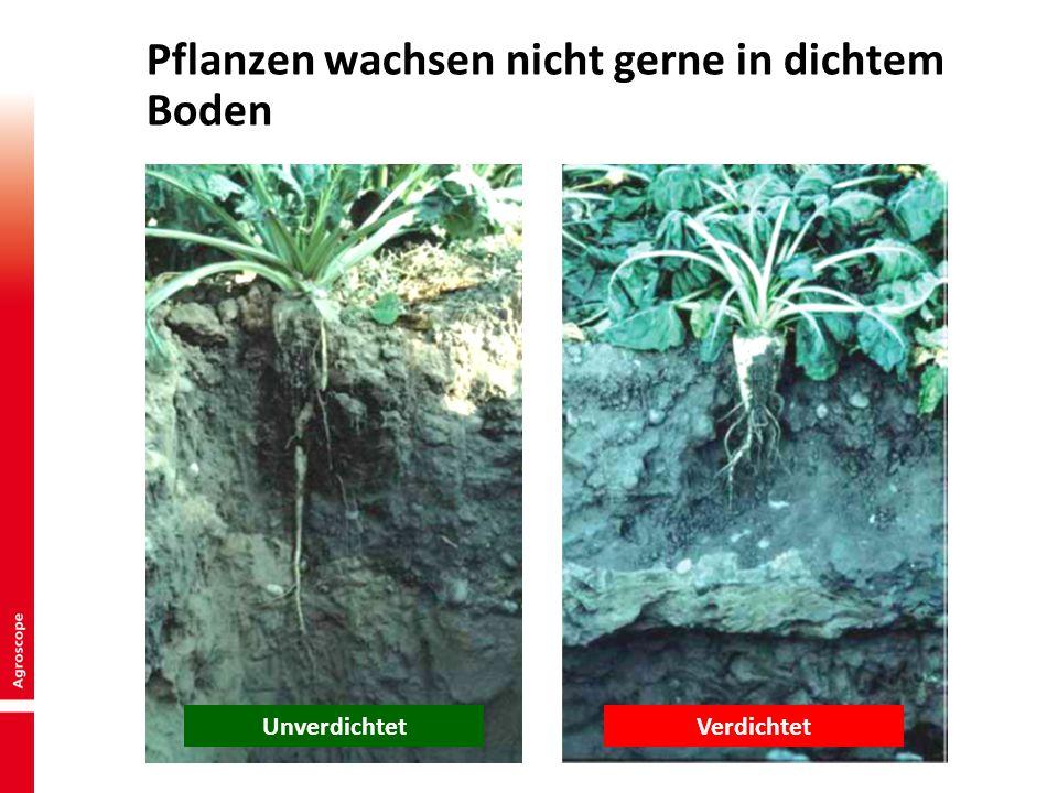 Pflanzen wachsen nicht gerne in dichtem Boden