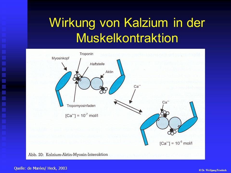 Wirkung von Kalzium in der Muskelkontraktion