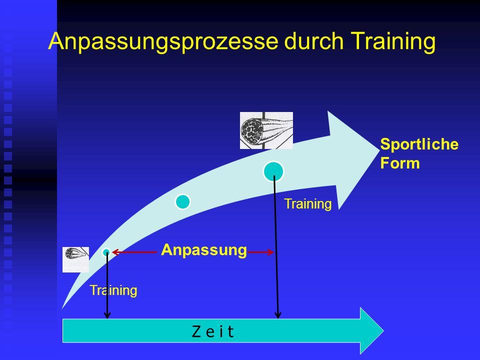 Anpassungsprozesse durch Training