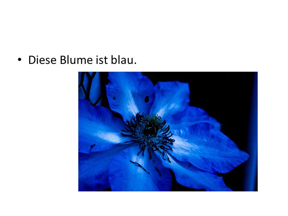 Diese Blume ist blau.