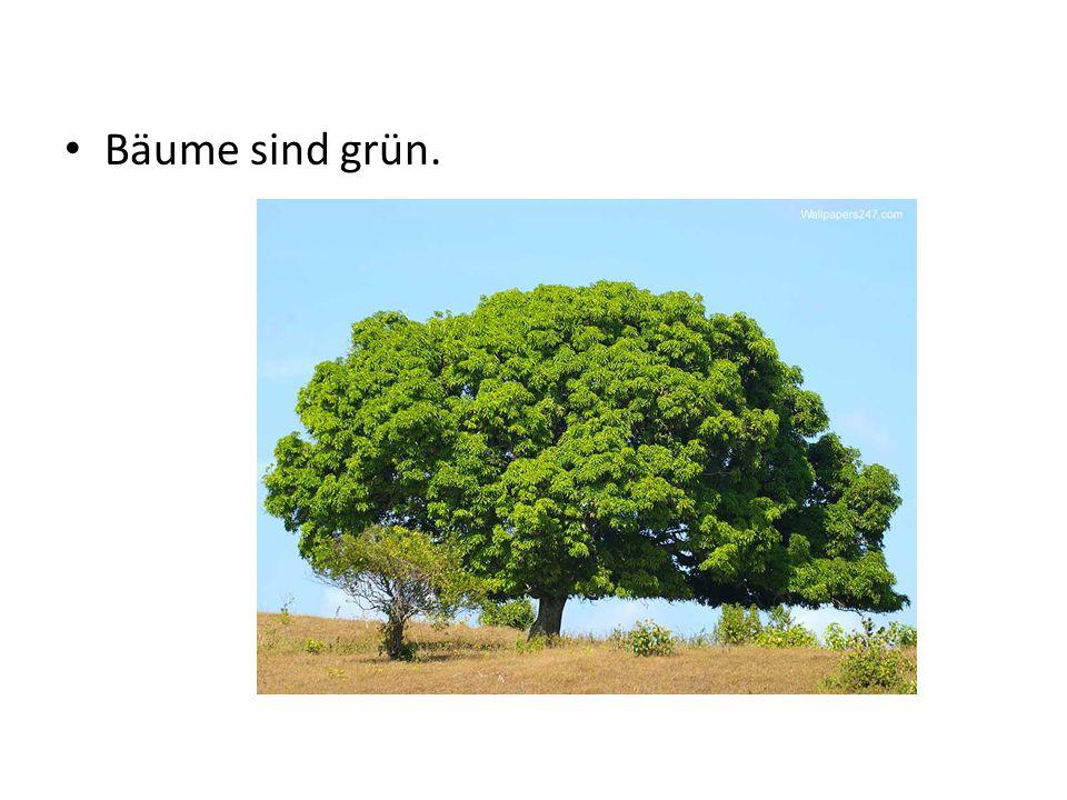 Bäume sind grün.