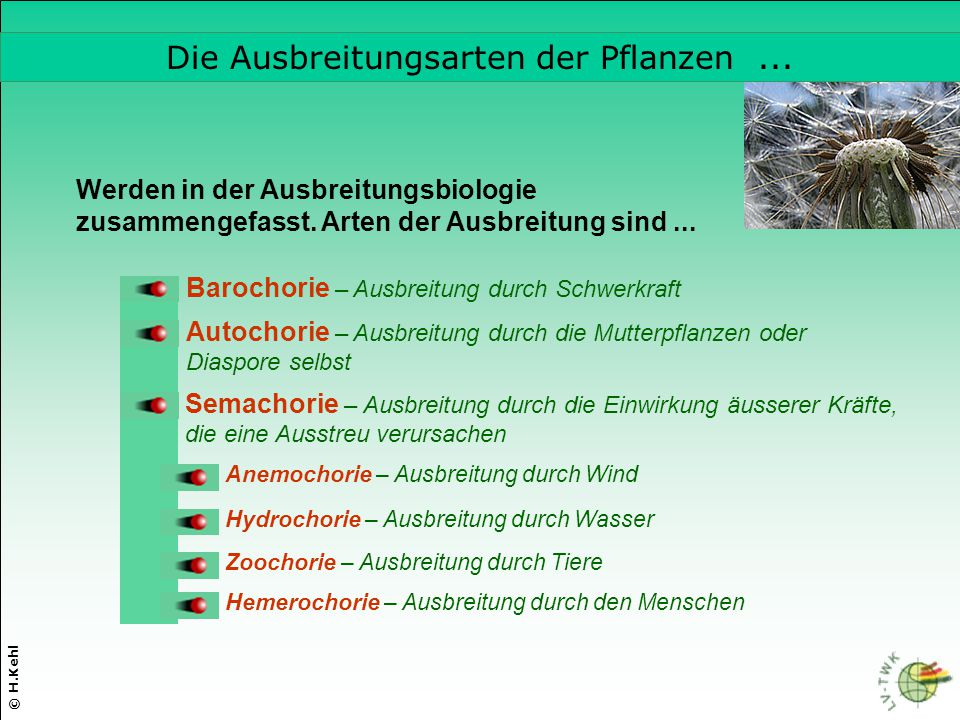 Die Ausbreitungsarten der Pflanzen ...