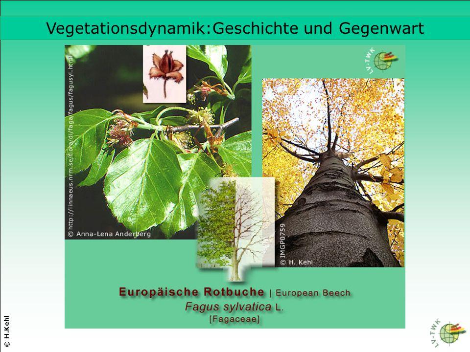 Vegetationsdynamik:Geschichte und Gegenwart