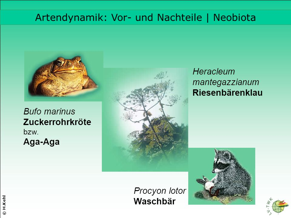 Artendynamik: Vor- und Nachteile | Neobiota