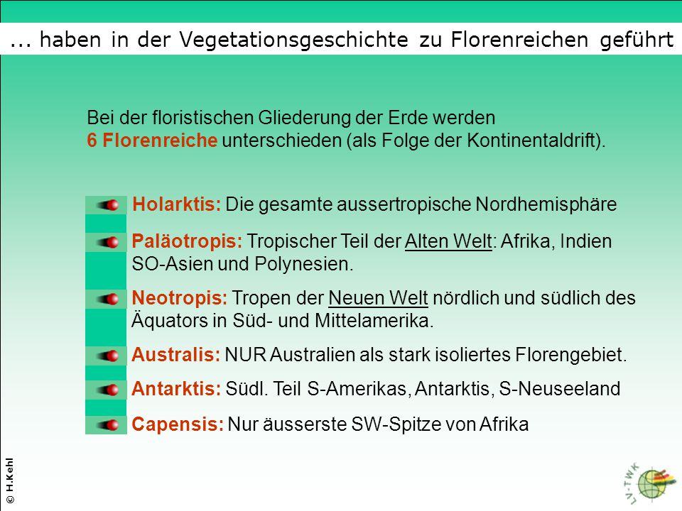 ... haben in der Vegetationsgeschichte zu Florenreichen geführt