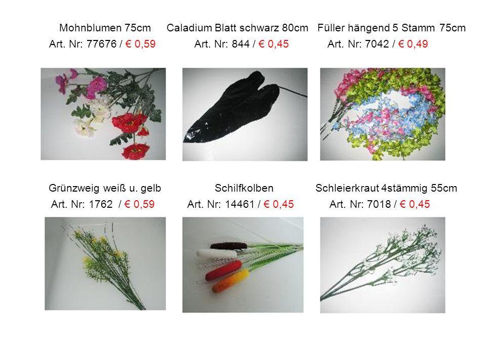 Mohnblumen 75cm Caladium Blatt schwarz 80cm Füller hängend 5 Stamm 75cm Art. Nr: 77676 / € 0,59 Art. Nr: 844 / € 0,45 Art. Nr: 7042 / € 0,49