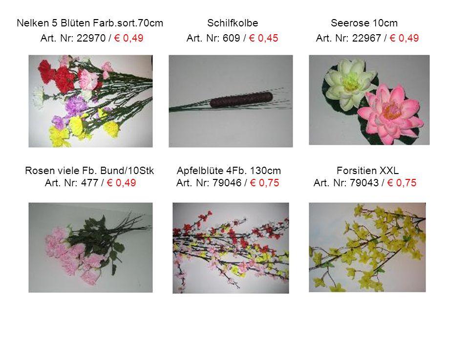 Nelken 5 Blüten Farb. sort. 70cm Schilfkolbe Seerose 10cm Art