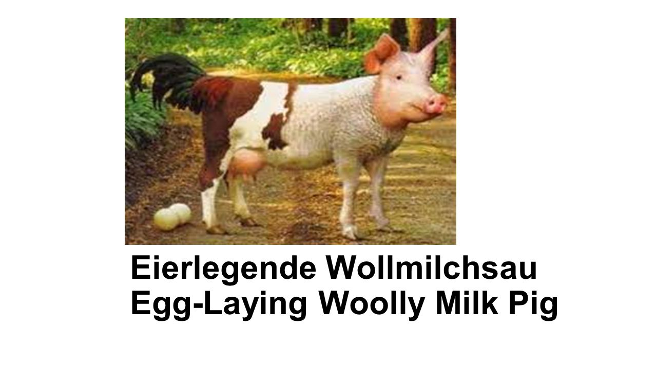 Eierlegende Wollmilchsau Egg-Laying Woolly Milk Pig