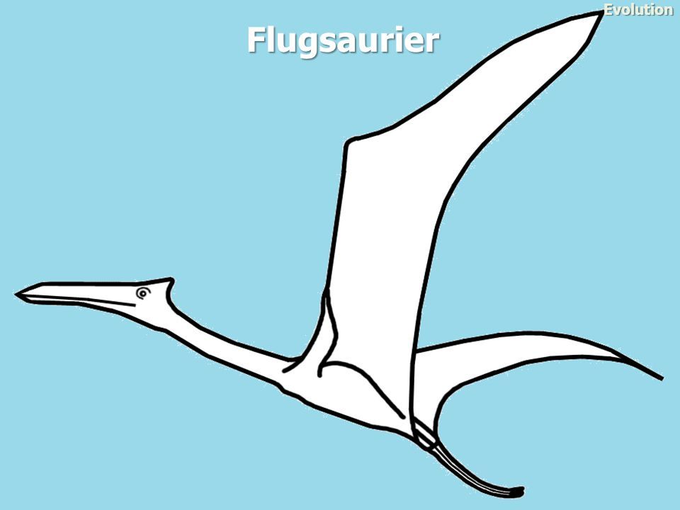 Evolution Flugsaurier