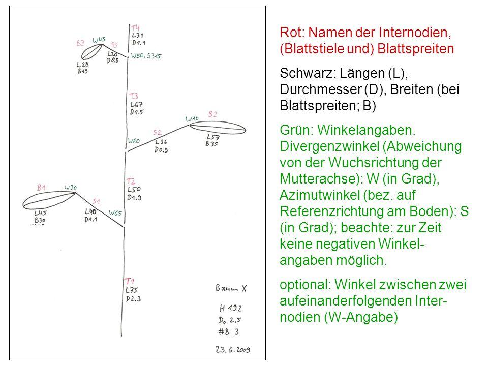 Rot: Namen der Internodien, (Blattstiele und) Blattspreiten
