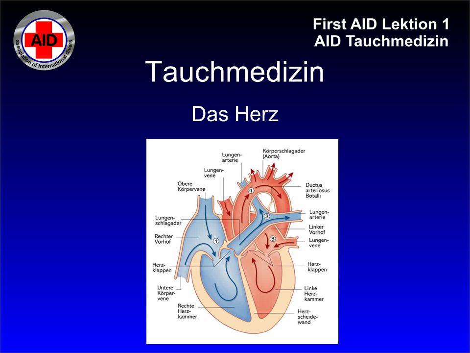 Tauchmedizin Das Herz