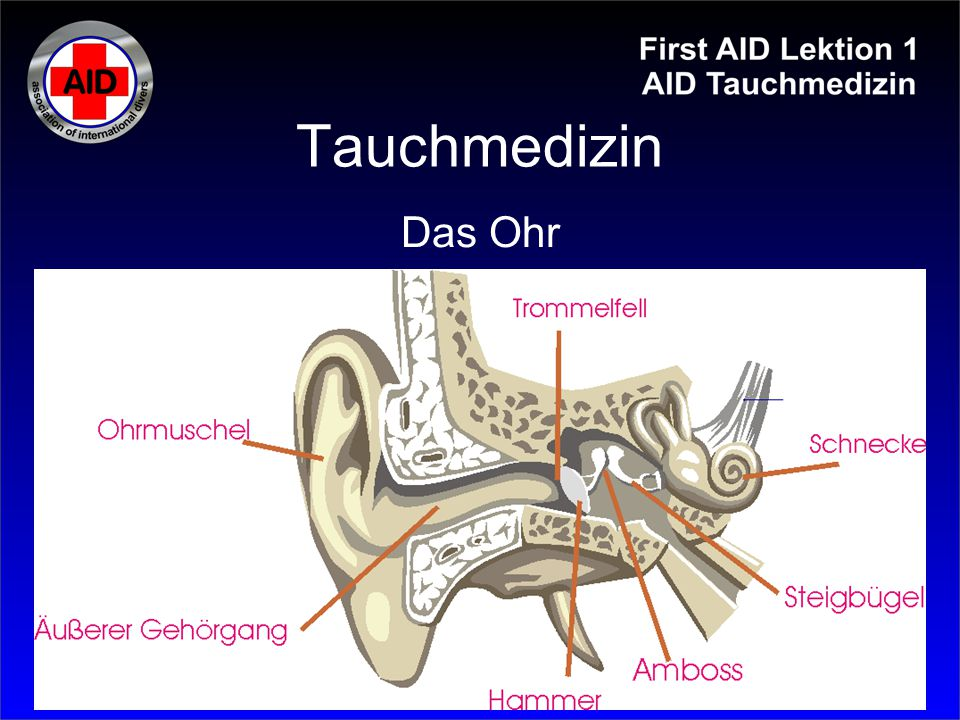 Tauchmedizin Das Ohr