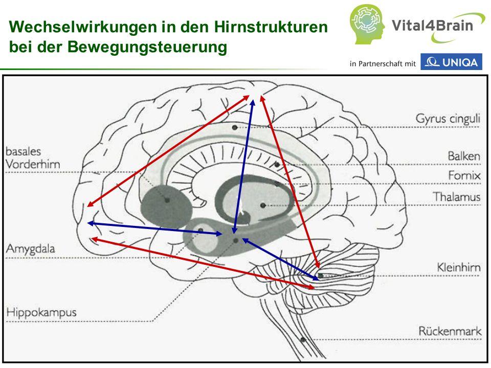 Wechselwirkungen in den Hirnstrukturen bei der Bewegungsteuerung