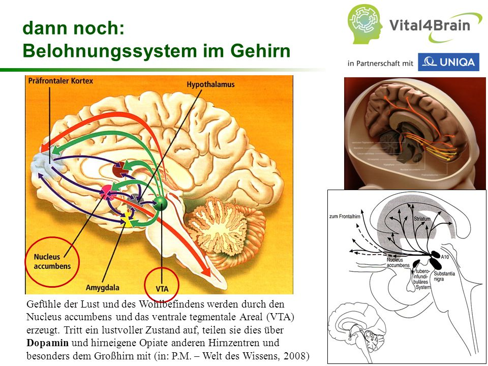 dann noch: Belohnungssystem im Gehirn