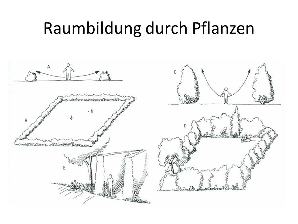 Raumbildung durch Pflanzen