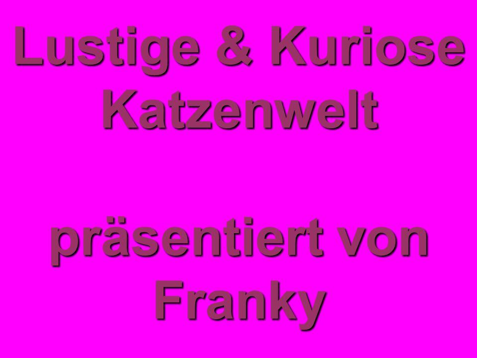 lustige kuriose katzenwelt pr sentiert von franky ppt video online herunterladen. Black Bedroom Furniture Sets. Home Design Ideas