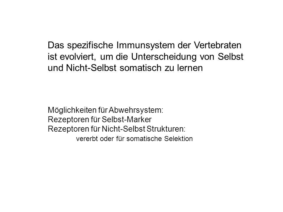 Das spezifische Immunsystem der Vertebraten