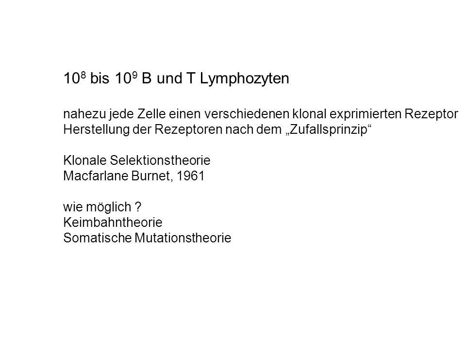 108 bis 109 B und T Lymphozyten nahezu jede Zelle einen verschiedenen klonal exprimierten Rezeptor.