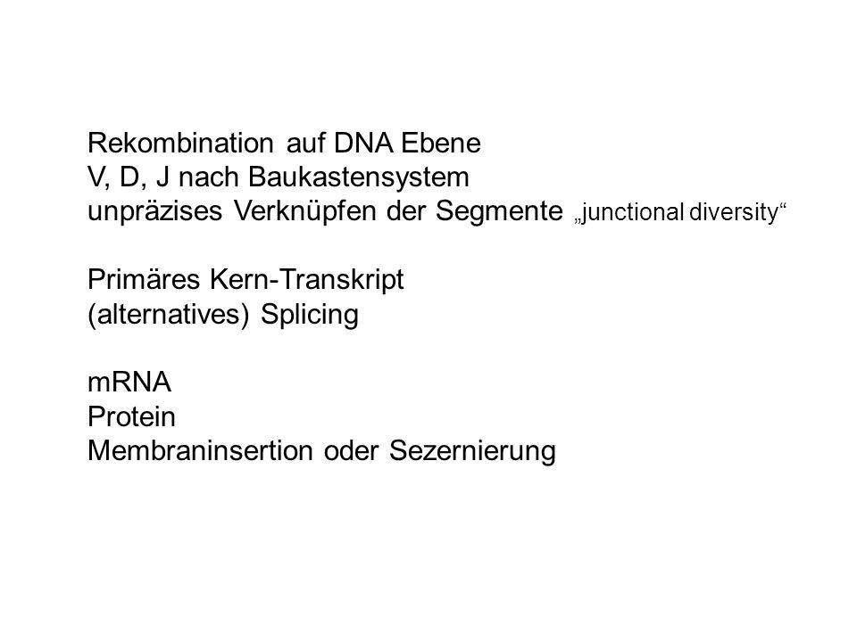 Rekombination auf DNA Ebene