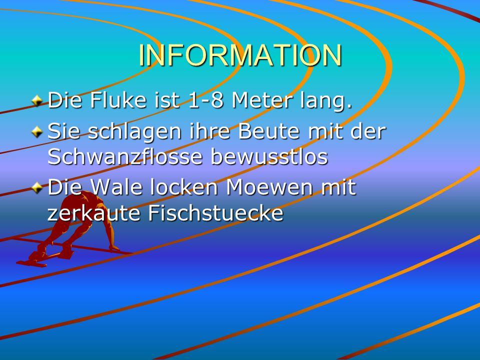 INFORMATION Die Fluke ist 1-8 Meter lang.