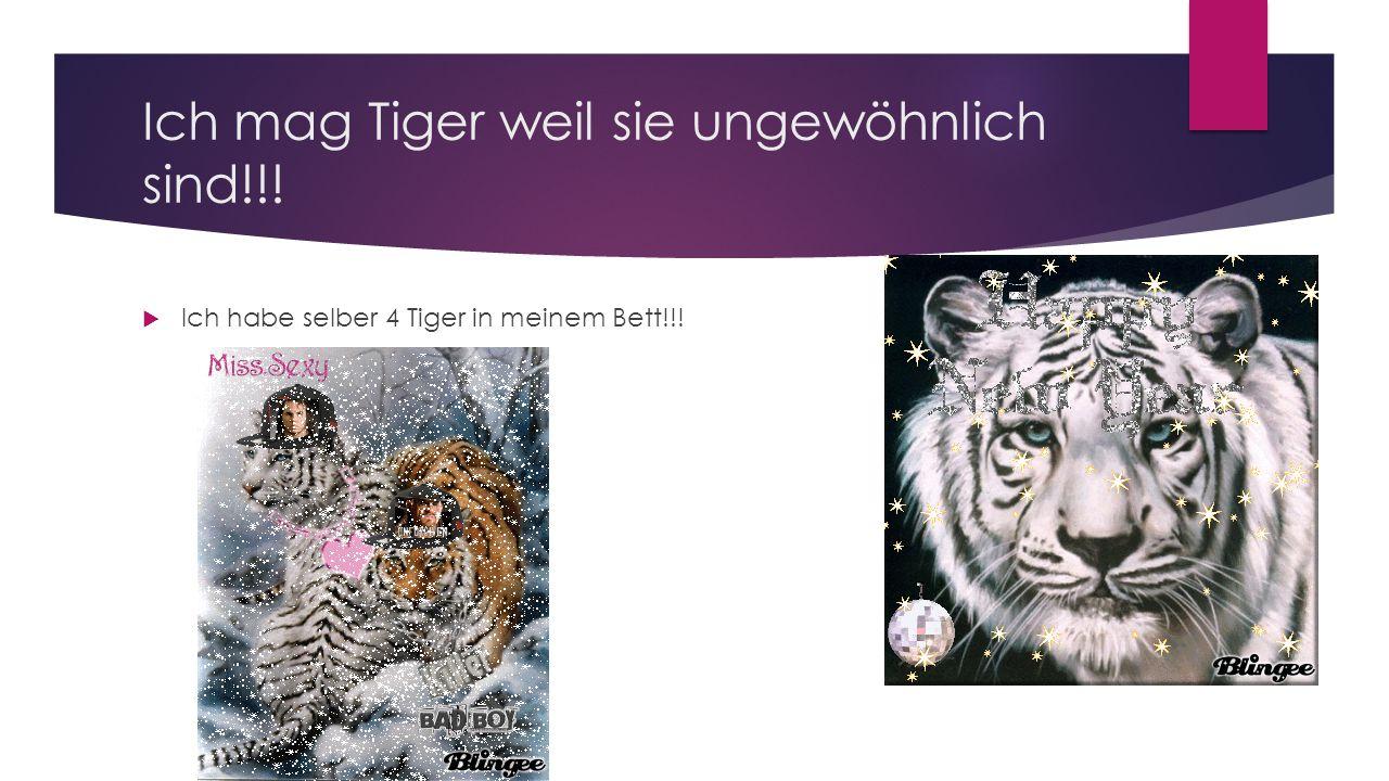 Ich mag Tiger weil sie ungewöhnlich sind!!!