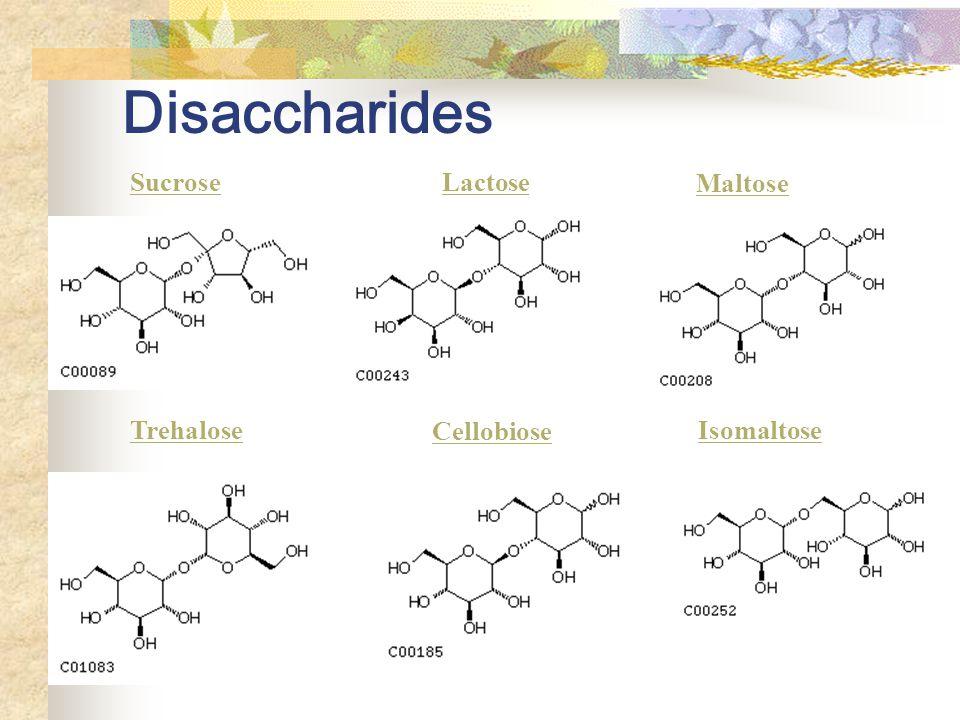 Disaccharides Sucrose Lactose Maltose Trehalose Cellobiose Isomaltose