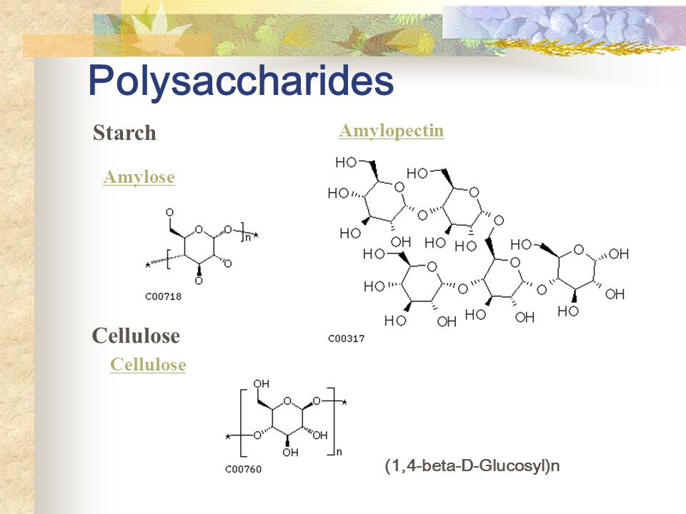 Polysaccharides Starch Cellulose Amylopectin Amylose Cellulose