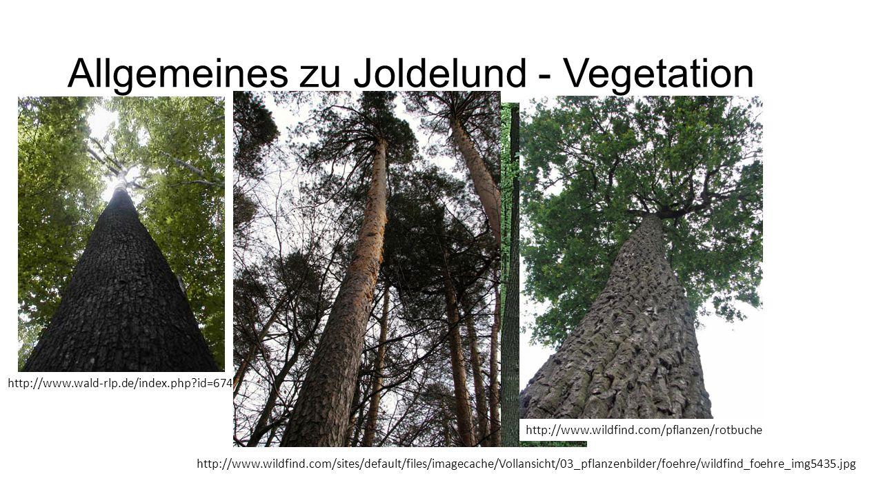 Allgemeines zu Joldelund - Vegetation