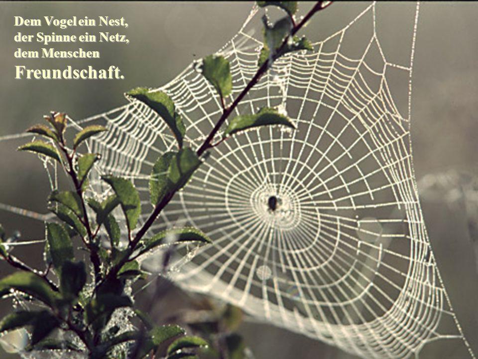 Dem Vogel ein Nest, der Spinne ein Netz, dem Menschen Freundschaft.