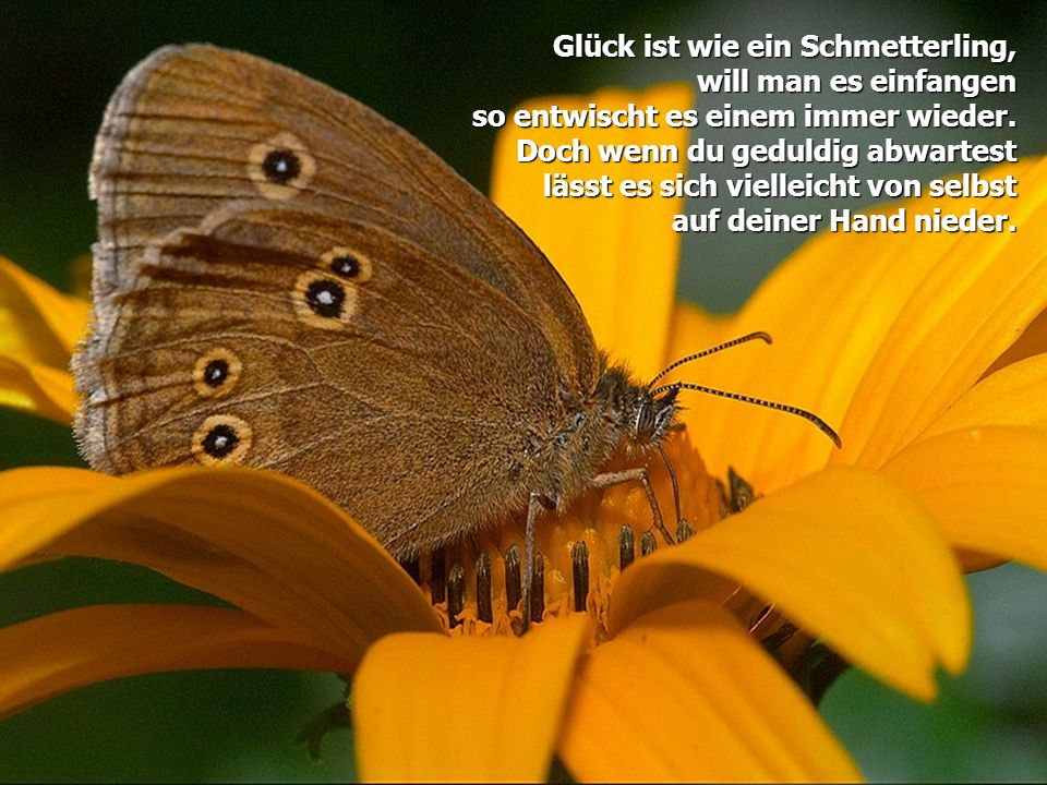 Glück ist wie ein Schmetterling,