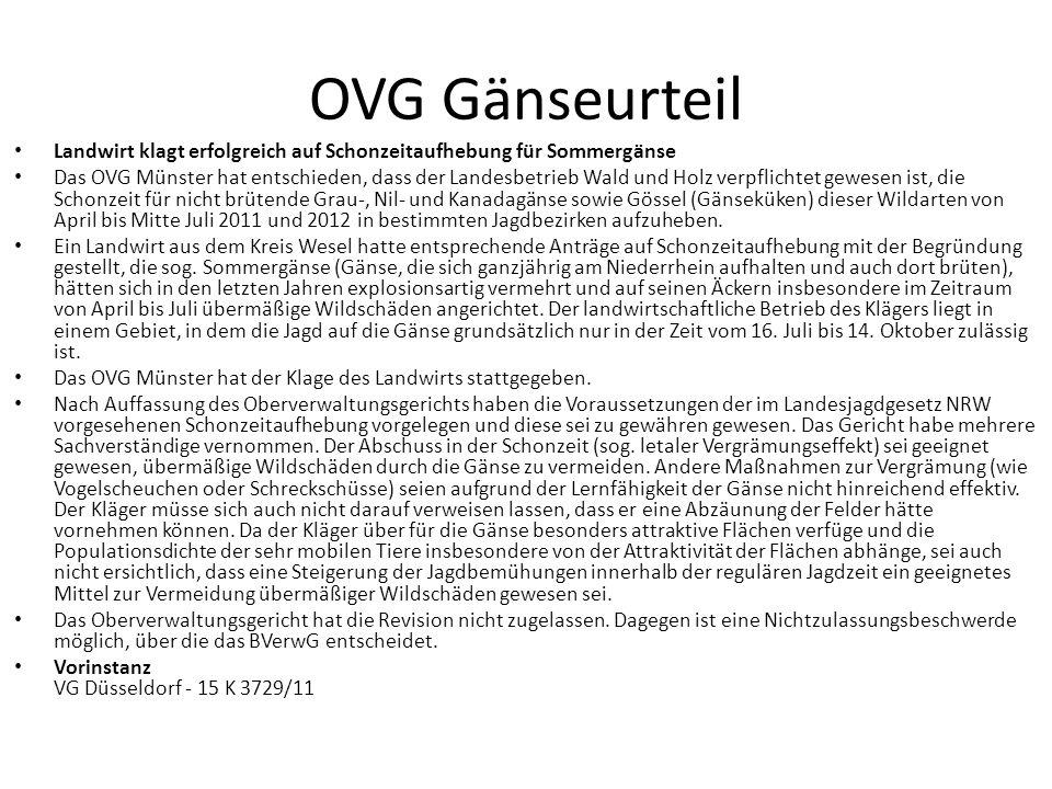 OVG Gänseurteil Landwirt klagt erfolgreich auf Schonzeitaufhebung für Sommergänse.